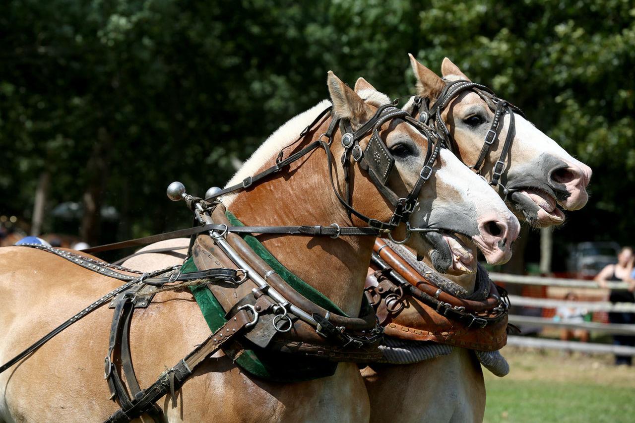 http://imnoexpert.com/wp-content/uploads/2015/08/Ag15_horses5.jpg